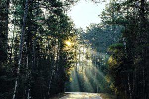 Wald durch den Sonnenstrahlen scheinen